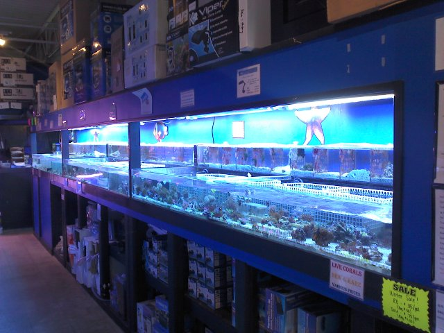 Coral System – Fully Stocked