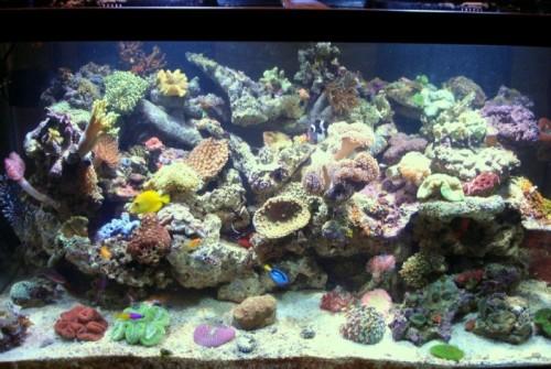 120  Reef Tank
