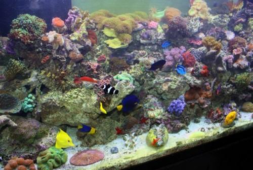 210 Coral Reef